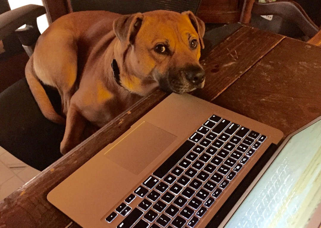 Our dog Thor at the keyboard.