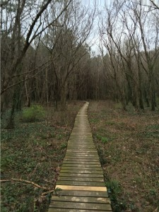 Wooden platforms make travel easier along the wetlands of Clyde Shepherd Nature Preserve